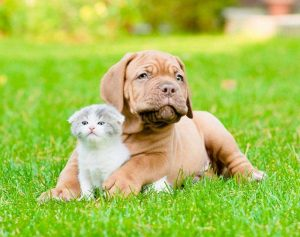 Veterinary Services In Iowa City Ia All Pets Veterinary Clinic