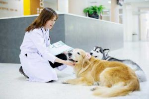 New Clients All Pets Veterinary Clinic